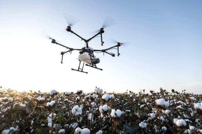 Eine Drohne überfliegt ein Baumwollfeld in Xinjiang